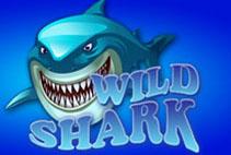 Wils Shark
